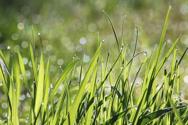 Johnson Grass… by Bob Carlton