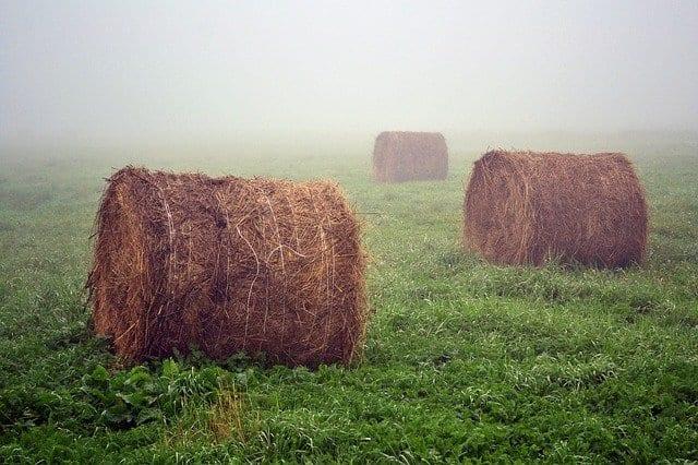 Summer Fog by Joe Roberts