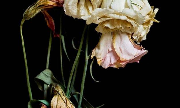 When Flowers Die by Len Carber
