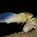 Cicada Summer by Elizabeth Brown