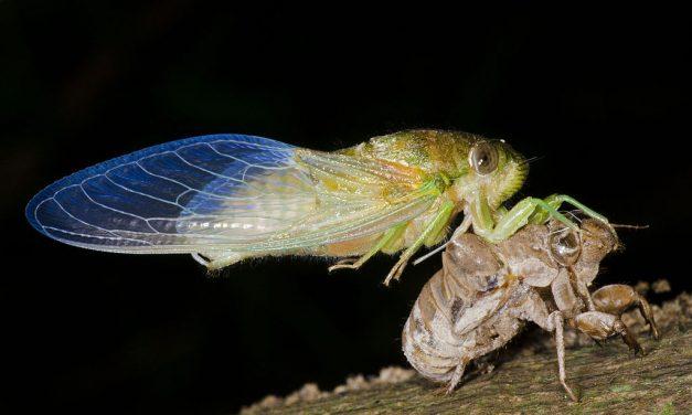 Cicada Summer by Elizabeth Brown